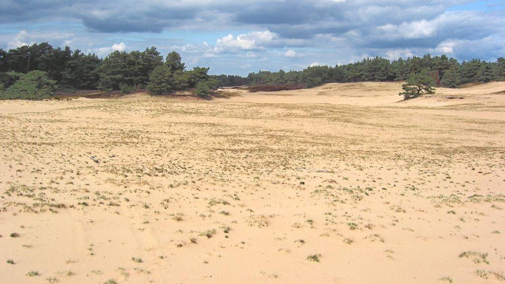 IVN wandeling: Speuren naar sporen op het Wekeromse Zand