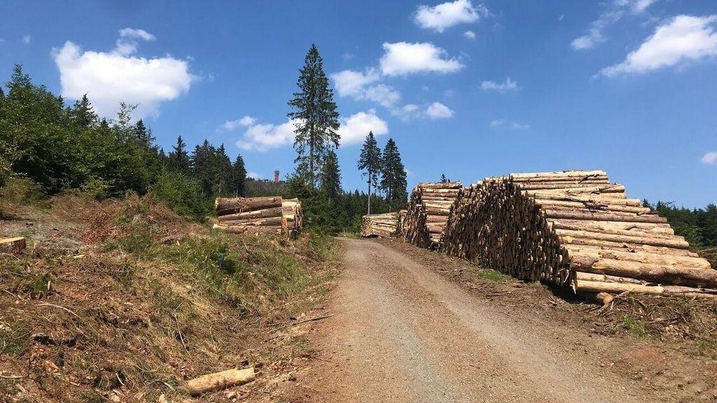 Vragen SGP-fractie over bomenkap in de lokale bossen