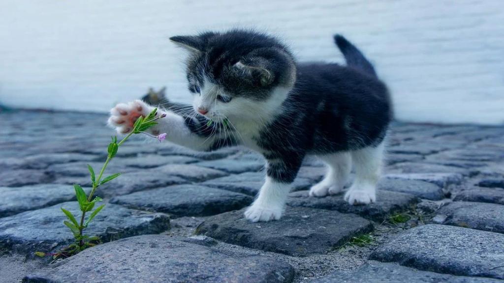 Stephan Neijenhuis maakt zich zorgen over de kattenopvang in Ede