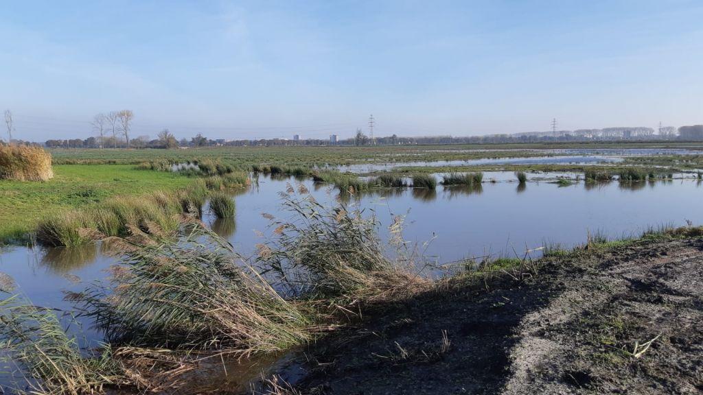 Werk in Binnenveldse Hooilanden is klaar: nieuwe natuur ontwikkelt zich volop
