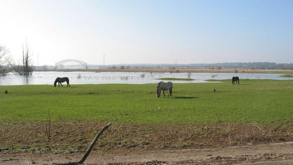 Laatste strohalm in strijd tegen bouw in Arnhemse uiterwaarden