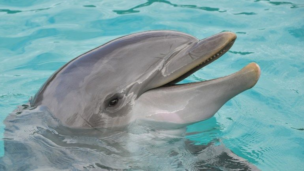 Dolfinarium wordt diervriendelijker; walrussen, tuimelaars en zeeleeuwen weg