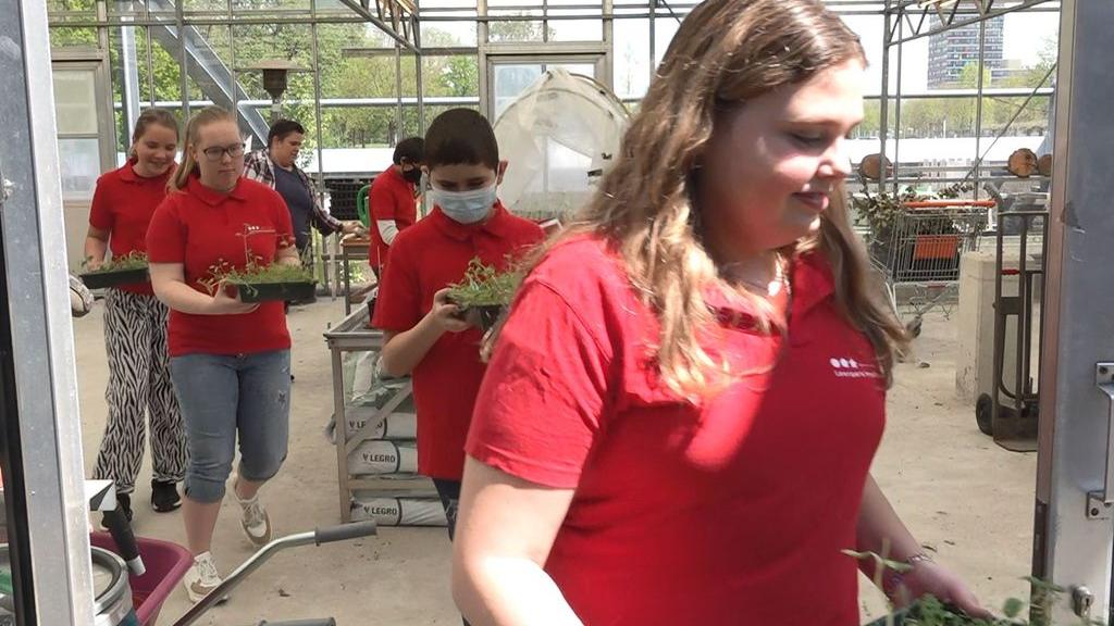 Brugklassers planten zelfgekweekte bloemen in wijken