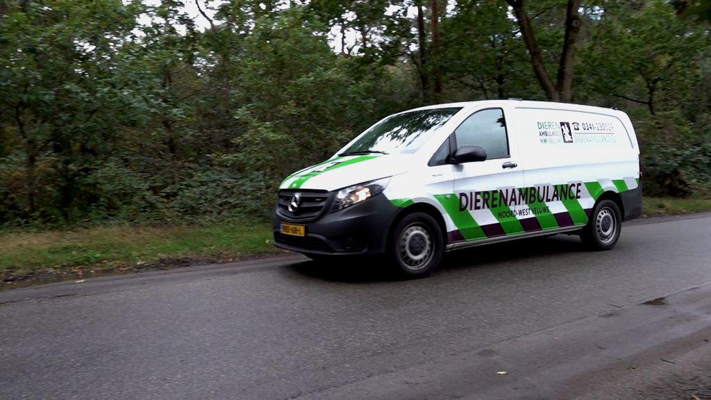 Dierenambulance Noord-West Veluwe zit te springen om vrijwilligers