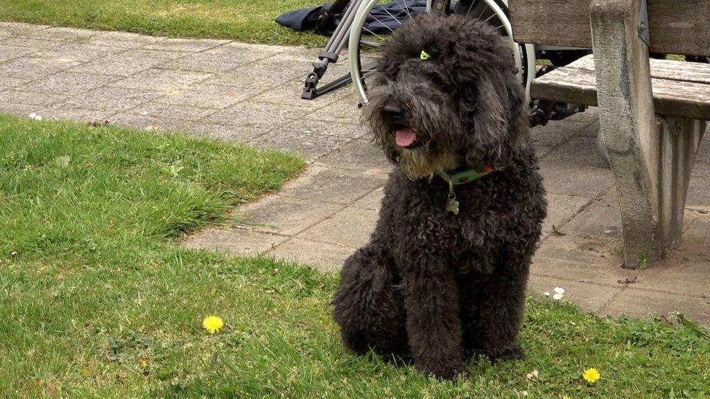 Hond Black zorgt voor een glimlach in het verzorgingstehuis
