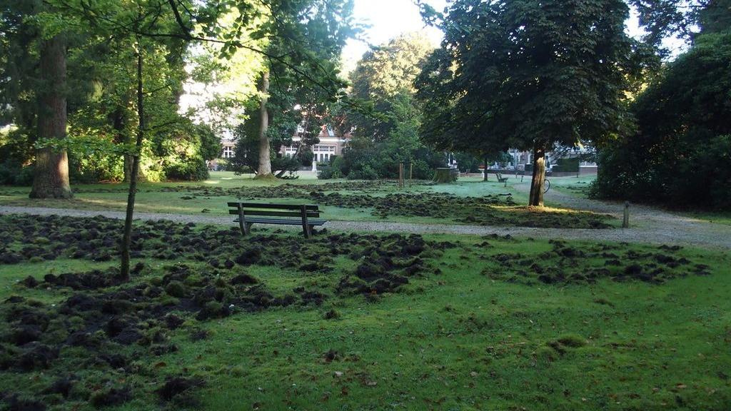 Wilde zwijnen woelden het gazon van Landgoed Laag Soeren bijna volledig om Foto: Joke van Tol