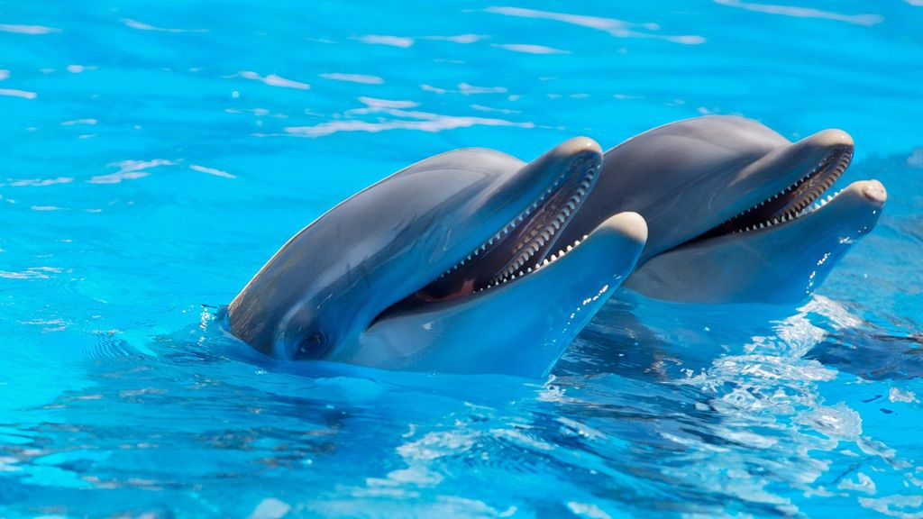 Het plan om de dolfijnen naar China te verhuizen is even uniek als omstreden. Foto: Pixabay