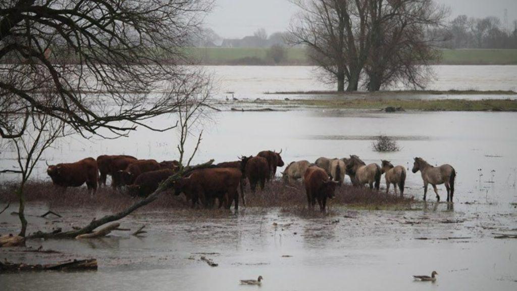 Oproep: meld dierenkadavers hoge water en ruim ze niet zelf op
