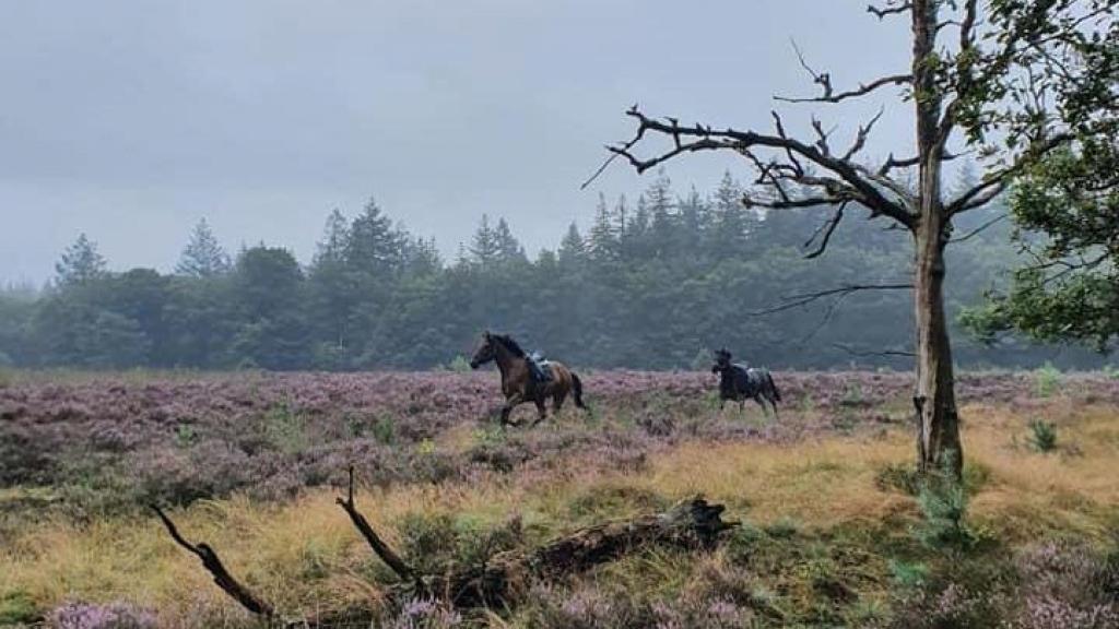 Paarden slaan op de vlucht en rennen de heide over