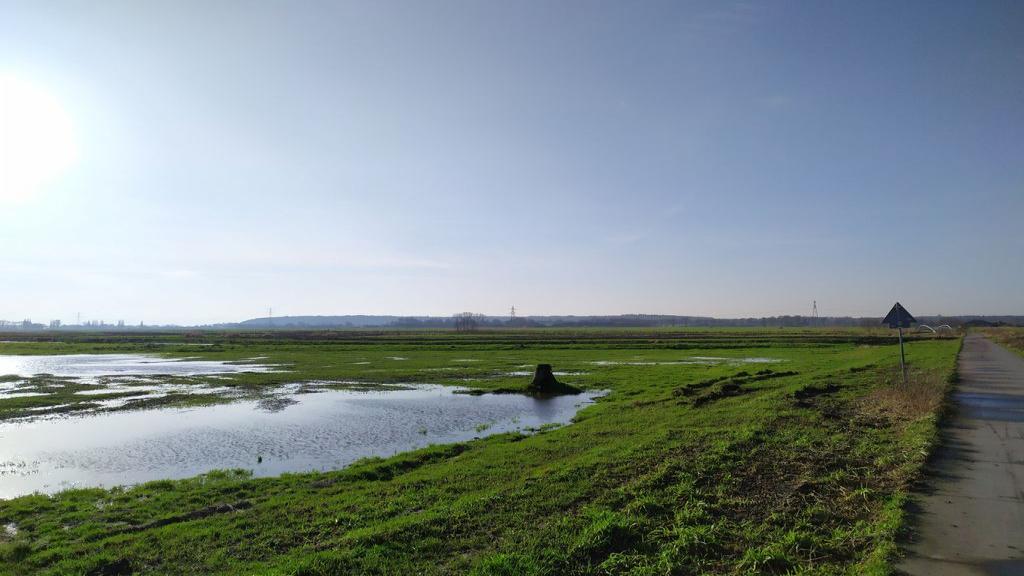 'Eerste broedvogelinventarisatie van de nieuwe Binnenveldse Hooilanden', lezing door Linus van der Plas