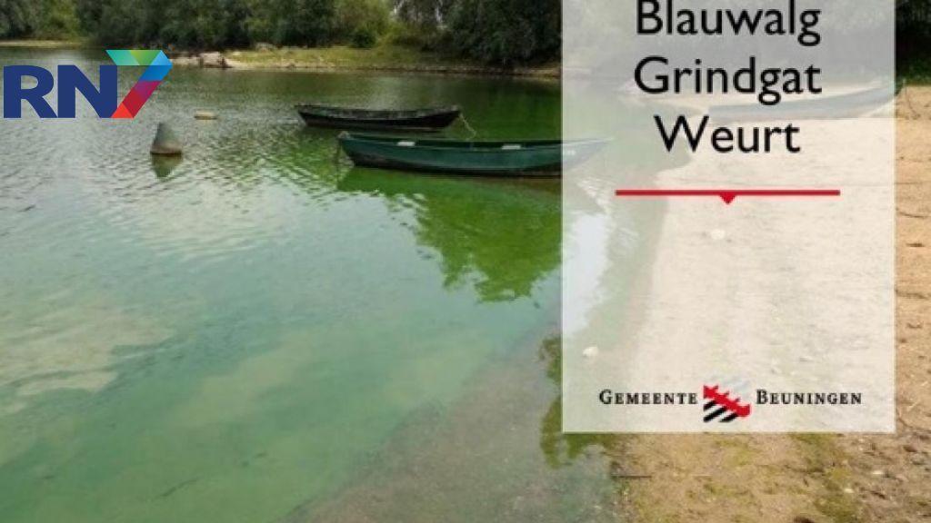 Blauwalg in grindgat Weurt, uitbreiding verwacht door hitte