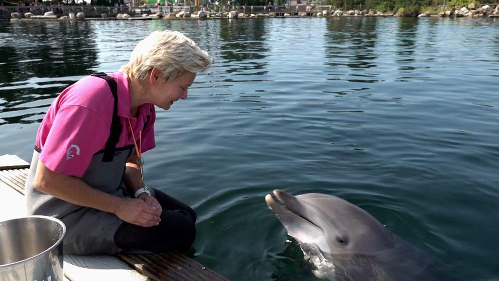 'Ze was ontzettend slim', Bernadet zorgde ruim 25 jaar voor dolfijn Maaike