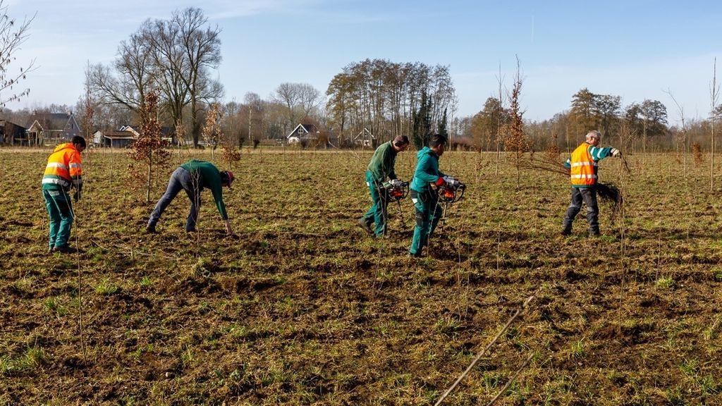 Eerste hectares nieuw bos in Gelderland liggen bij Epe