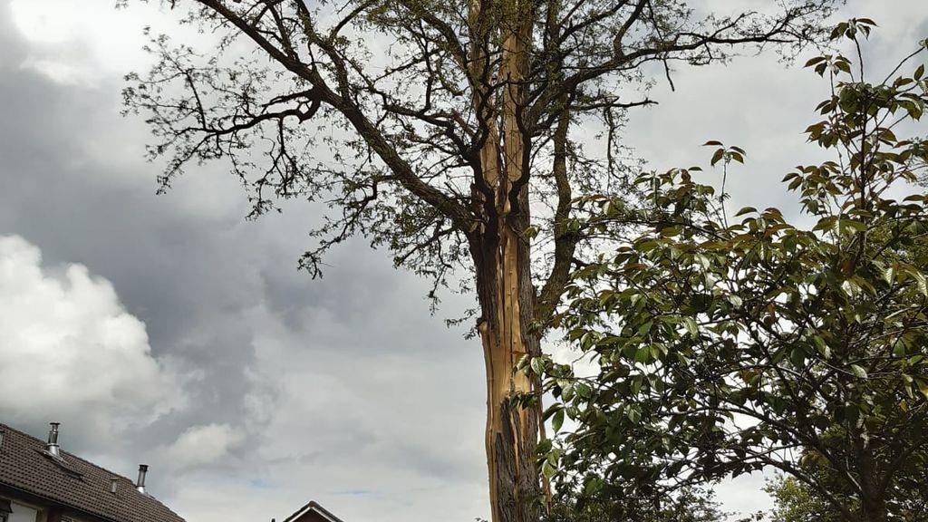 Bliksem slaat in in boom aan de Jan Topweg/Kienschulperweg