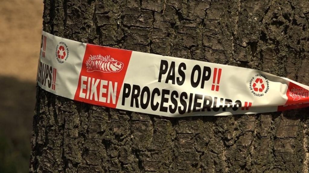 Minder jeukrupsen in Rivierenland, maar meer in Tiel en Buren
