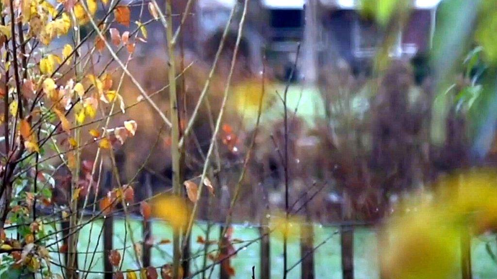 Tiny Forest Ede van start op twee schoolpleinen