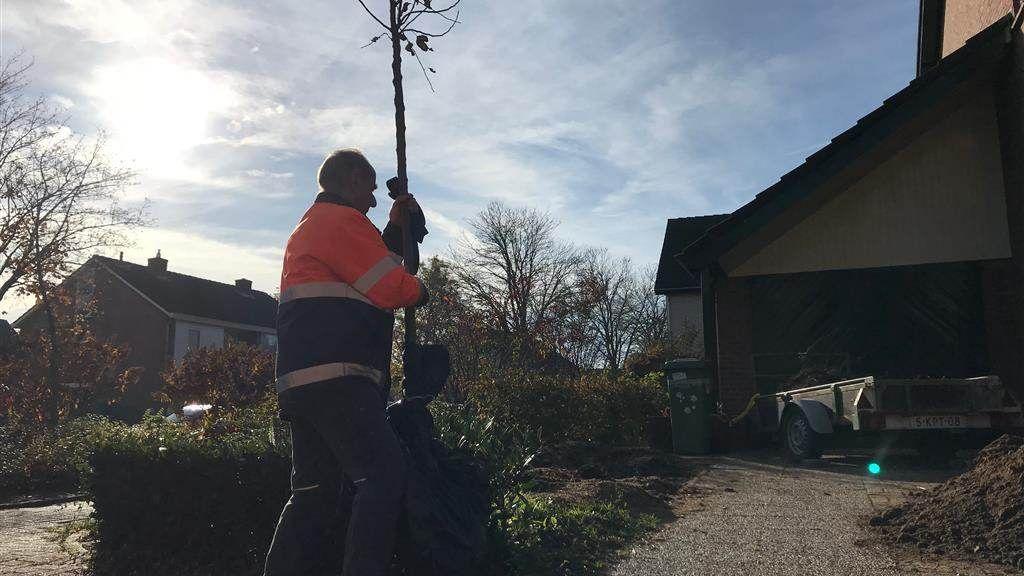 Vijfduizend bomen uitgedeeld in Doetinchem