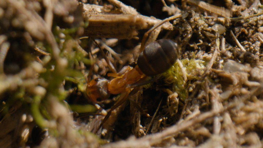 Langs de snelweg bij Bennekom ligt een speciaal natuurreservaat voor mieren