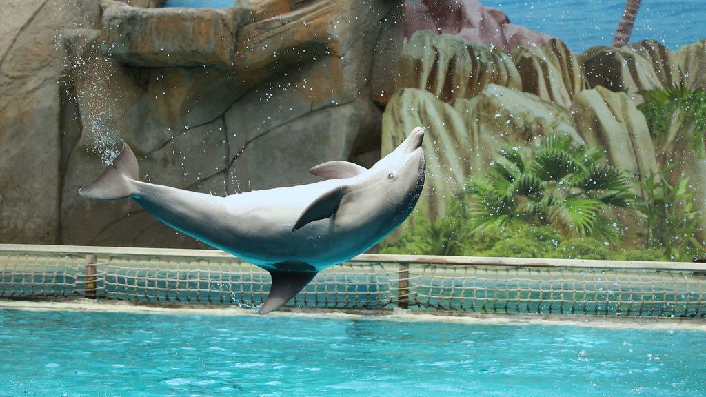 'Verbied verkoop van dolfijnen aan China', verzet tegen deal Dolfinarium groeit