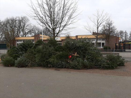 1261 kerstbomen ingeleverd in Elburg