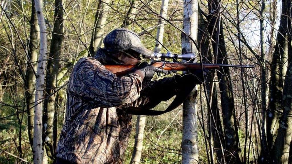 'Waanzin en gekkenwerk', veel kritiek op plan duizenden zwijnen en herten op Veluwe af te schieten