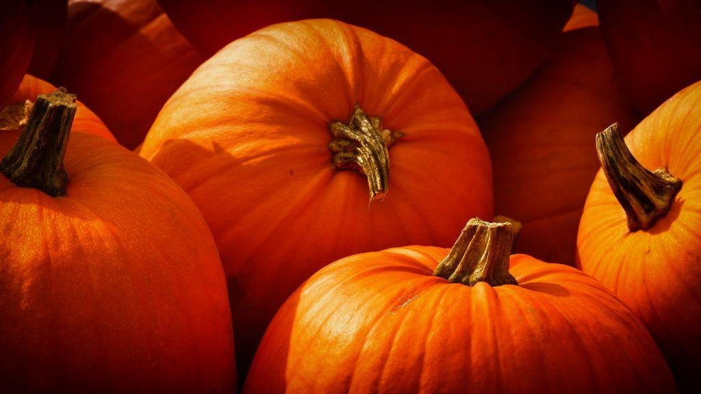 Stop voedselverspilling met Too Good to Go: Pompoenen voor Halloween