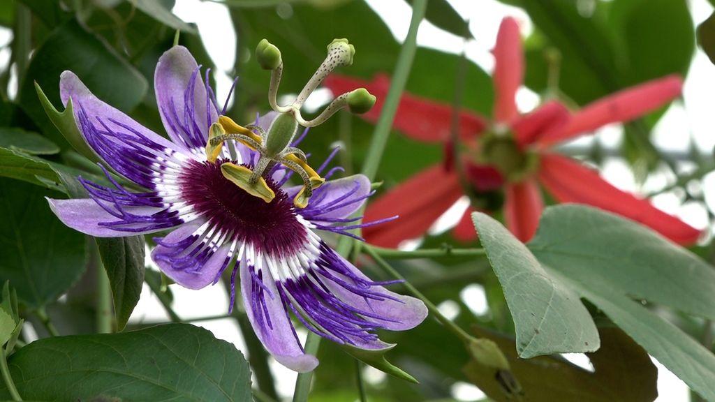Na achttien jaar sluit Passiflorahoeve de deuren
