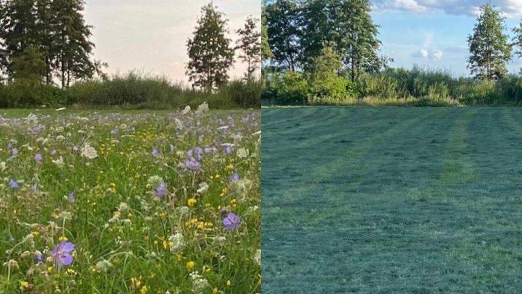 Bloeiend grasland gemaaid, natuurliefhebbers teleurgesteld