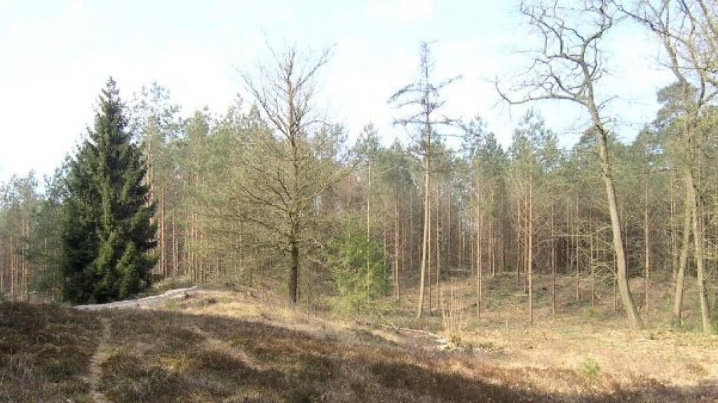 Geen natuurbegraafplaats op De Polberg in Wapenveld