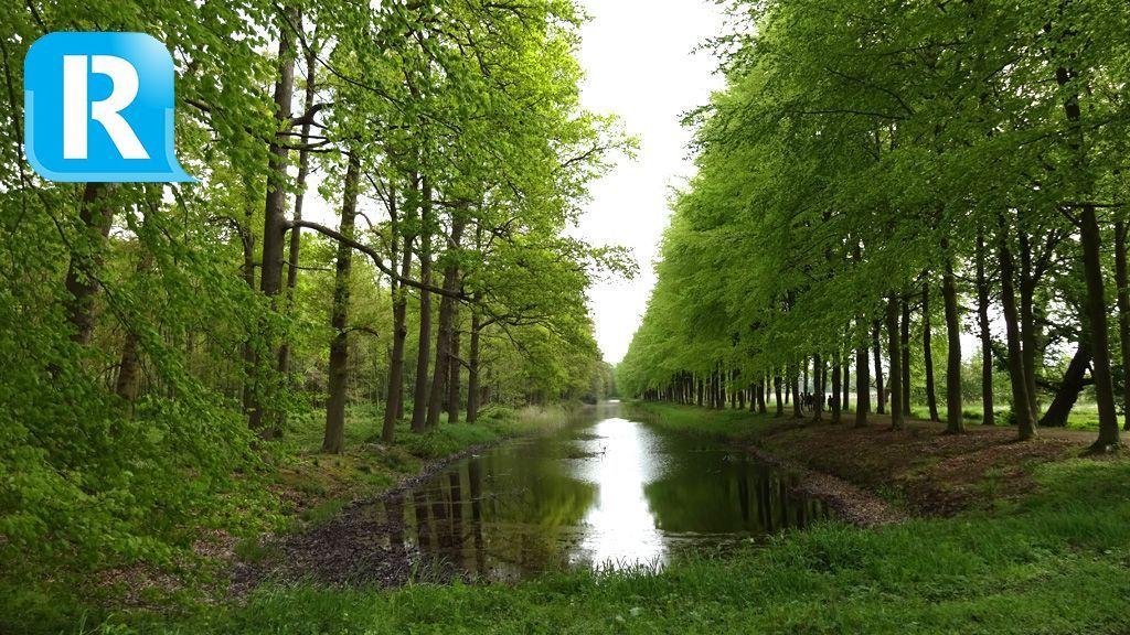 Rheden kapt veel zieke bomen in Dieren en Velp