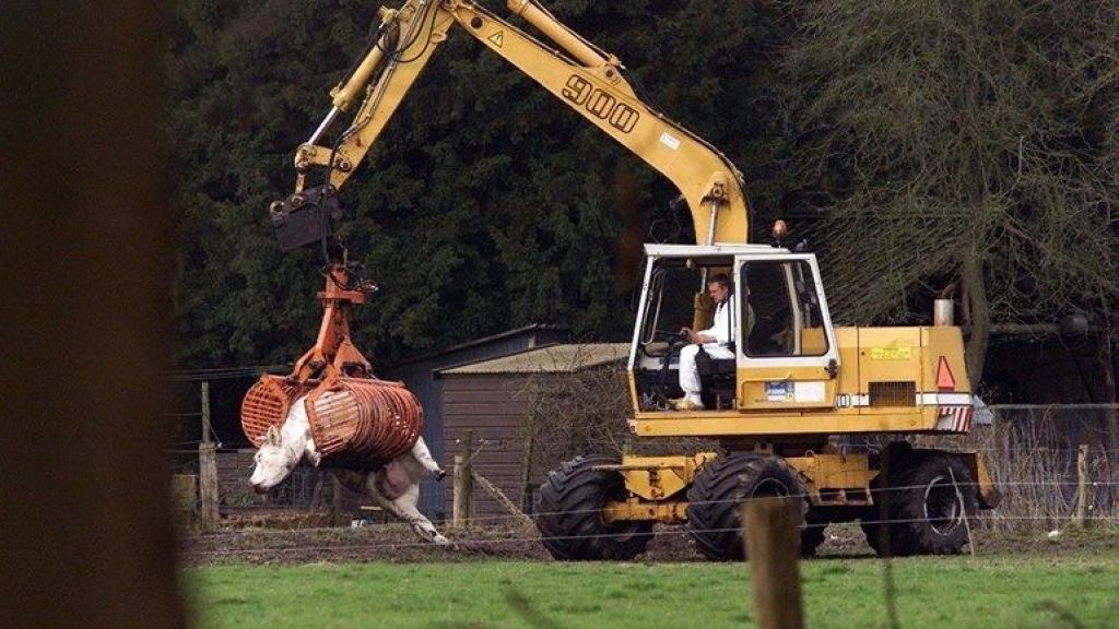 20 jaar na de MKZ-crisis: 285.000 dode dieren, maar 26 besmette boerderijen