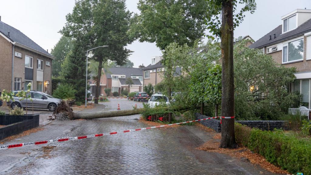 Beuningen kapt 107 dode en zieke bomen in hele gemeente