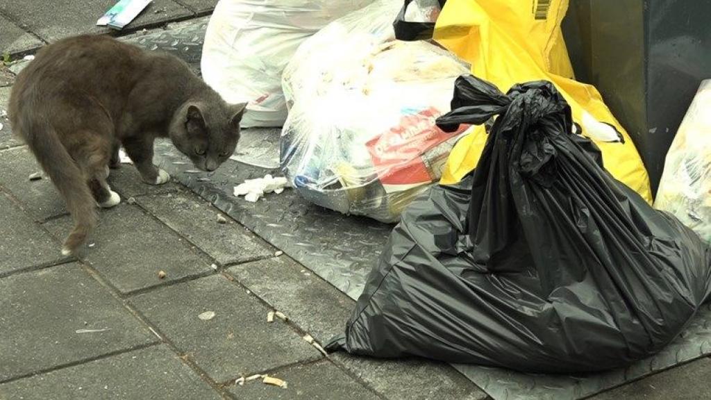 Arnhems miljoenentekort op afval door diftar en corona