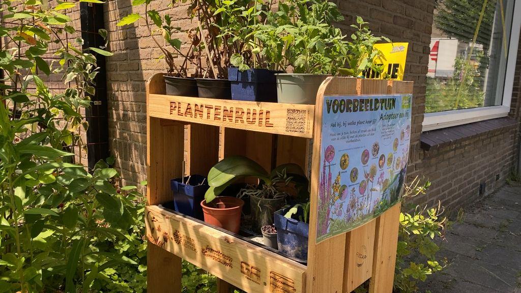 Planten ruilen moet Arnhem helpen vergroenen