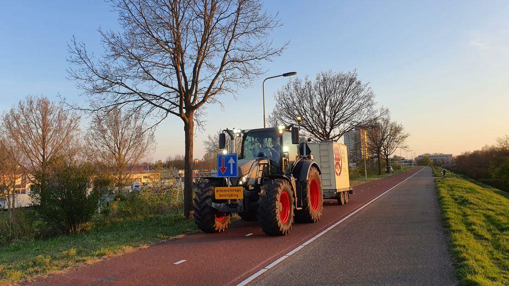 Arnhem start bestrijding eikenprocessierups